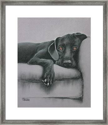 Framed Print featuring the drawing Jasper by Cynthia House
