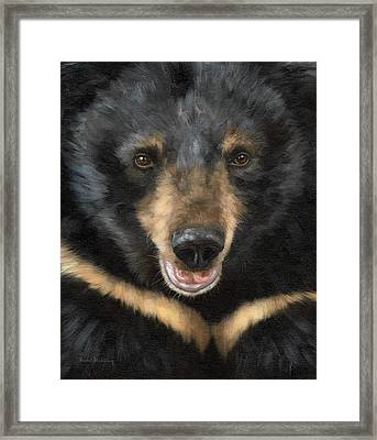 Jasper Moon Bear - In Support Of Animals Asia Framed Print