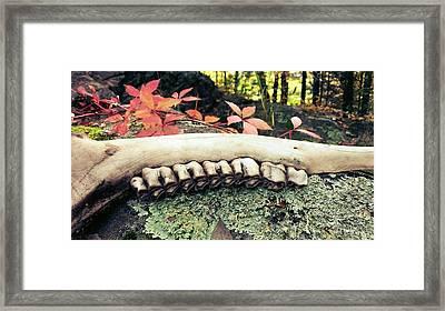 Jaw Bone Framed Print