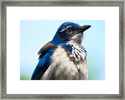 Jay Framed Print by Camille Lopez