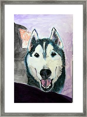 Jay In Purple.  Framed Print