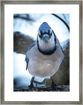 Jay Framed Print by Phil Abrams