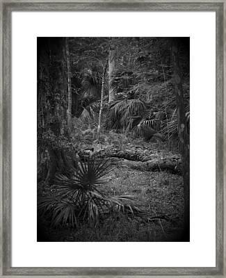 Jb Starkey Number 2 Framed Print by Phil Penne