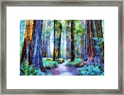 Jedediah Smith Grove Framed Print
