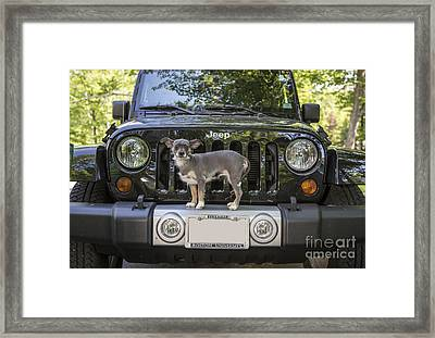 Jeep Dog Framed Print by Edward Fielding