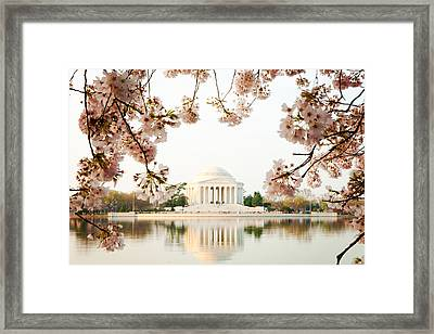 Jefferson Memorial With Reflection And Cherry Blossoms Framed Print