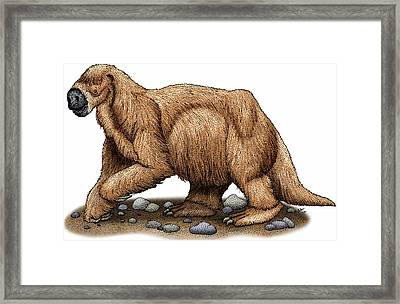 Jeffersons Ground Sloth Framed Print by Roger Hall