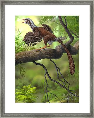 Jeholornis Prima Perched On A Tree Framed Print by Sergey Krasovskiy