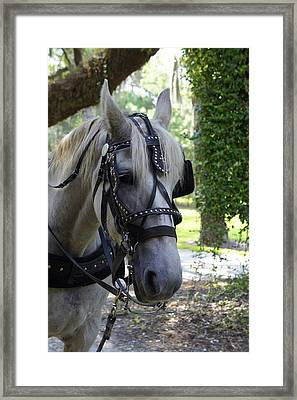 Jekyll Horse Framed Print by Laurie Perry