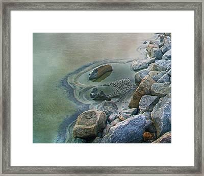 Jekyll Island Tidal Pool Framed Print
