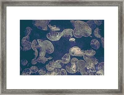 Jellies Framed Print by Celestial Images