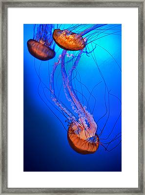 Jelly #1 Framed Print