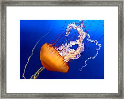 Jelly #2 Framed Print by Nikolyn McDonald