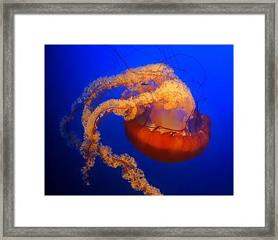 Jelly #4 Framed Print
