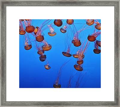 Jelly Dive Framed Print by Ashley Van Artsdalen