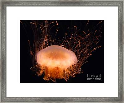 Framed Print featuring the photograph Jelly Electric by Steed Edwards