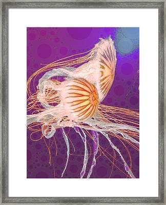 Jelly Fish 4 Framed Print by Cindy Edwards