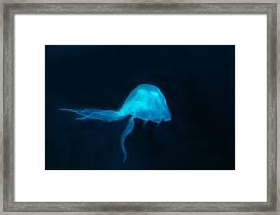 Jelly Fish Blue Framed Print