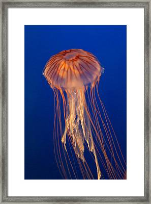 Framed Print featuring the photograph Jelly Fish by Eti Reid