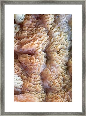 Jelly-rot Fungus Abstract Framed Print by Nigel Downer