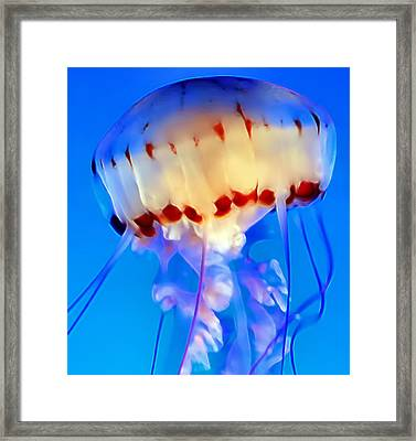 Jellyfish 3 Framed Print by Dawn Eshelman