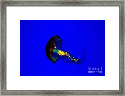 Jellyfish Framed Print by Angelika Bentin