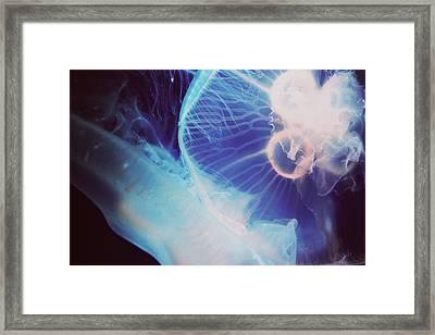 Jellyfish Framed Print by Claudia Avila