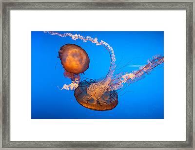 Jellyfish Dance Framed Print