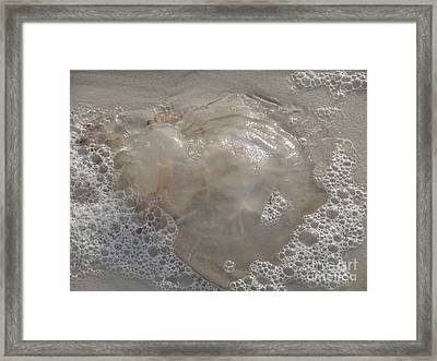 Jellyfish Framed Print by Deborah DeLaBarre