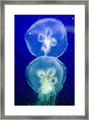 Jellyfish Framed Print by Gene Walls