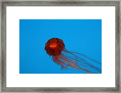 Jellyfish - National Aquarium In Baltimore Md - 121230 Framed Print by DC Photographer
