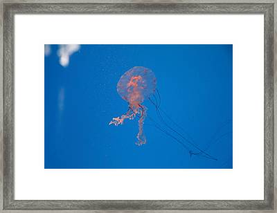 Jellyfish - National Aquarium In Baltimore Md - 121232 Framed Print