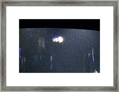 Jellyfish - National Aquarium In Baltimore Md - 121234 Framed Print by DC Photographer