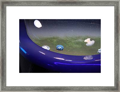 Jellyfish - National Aquarium In Baltimore Md - 121241 Framed Print by DC Photographer