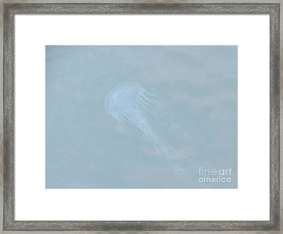 Jellyfish On The Bay Framed Print by Debbie Nester