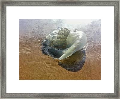 Jellyfish On The Beach Framed Print by Photostock-israel