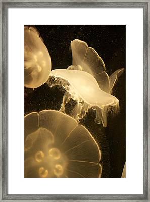 Jellyfish Universe Framed Print by Bonita Hensley