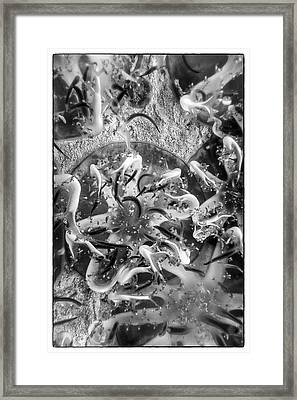 Jellyfish Upclose Framed Print