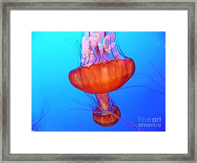 Jellyfish Viii Framed Print