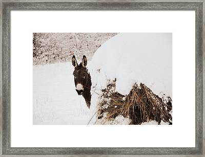 Jenny Framed Print by Cheryl Helms