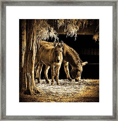 Jenny N Jack Framed Print by Robert Geary