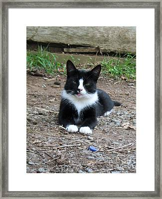 Framed Print featuring the photograph Jerry by Wendy Coulson