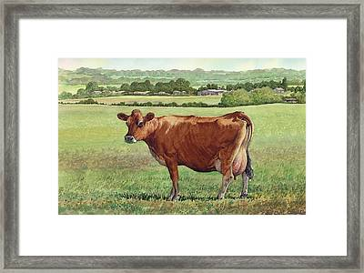 Jersey Cow Framed Print by Anthony Forster