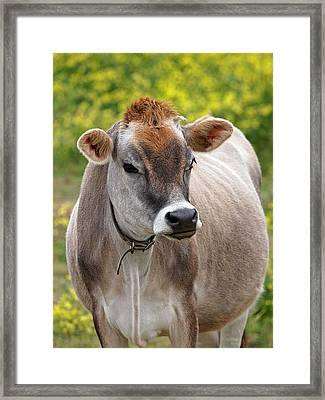 Jersey Cow With Attitude - Vertical Framed Print by Gill Billington