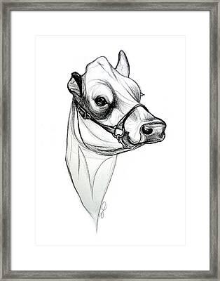 Jersey Sketch Framed Print by Emma Caldwell