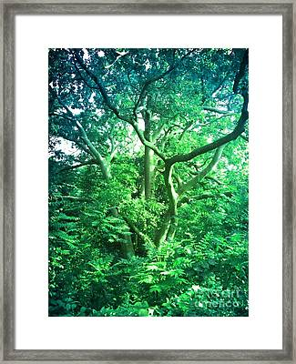 Framed Print featuring the photograph Jersey Tree by Denise Tomasura