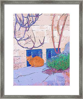 Jerusalem Alley Cat Framed Print