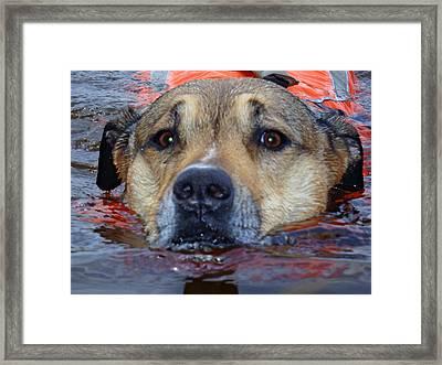 Jessie Swimming Framed Print