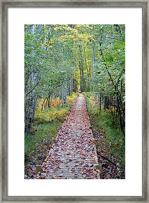 Jessup Path Acadia National Park Framed Print