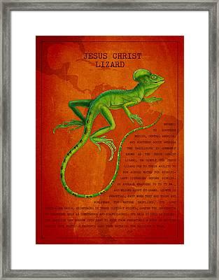Jesus Lizard Framed Print by Aged Pixel